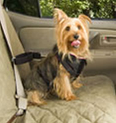 Solvit Pet Vehicle Safety Harness - Small