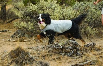 RuffWear Swamp Cooler on Dog